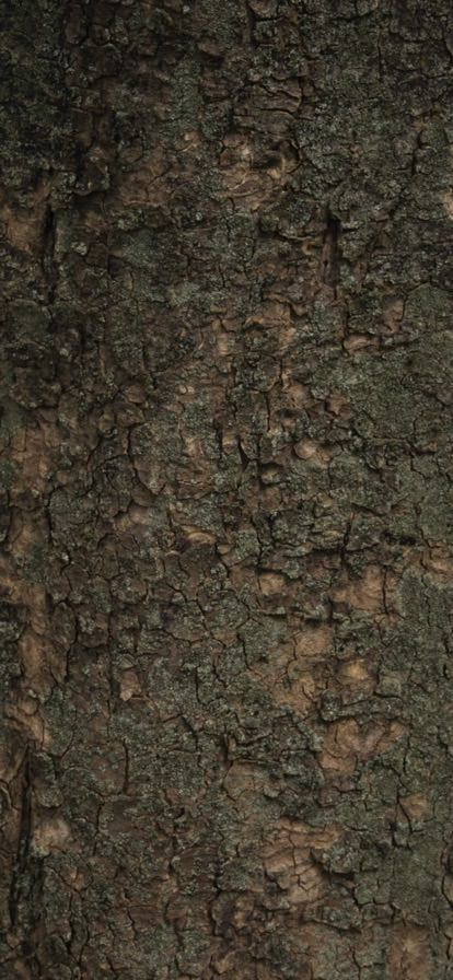 iPhone XR wallpaper 0625