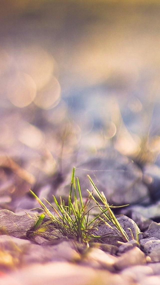 iPhone SE,5s wallpaper 1616